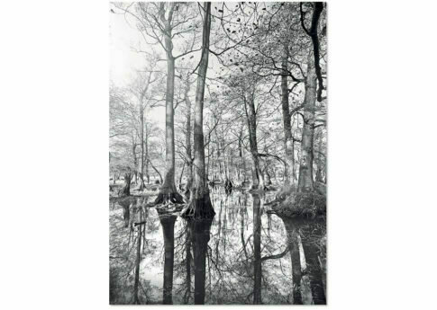 Affiche FOREST REFLECTION A3