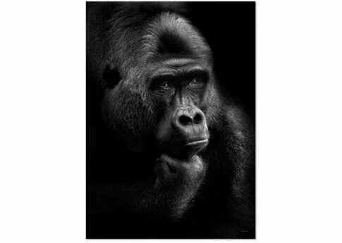 Affiche GORILLA THOUGHTS   A3 (Project protection des gorilles)