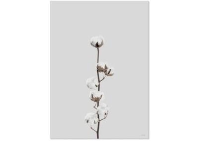 Affiche COTON FLOWER A3