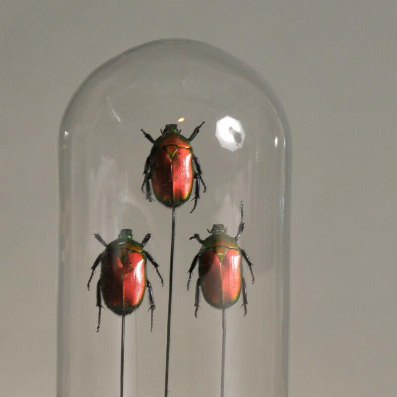 Mini Cloche / Globe Insectes rouges et verts