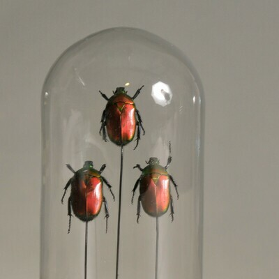 Mini Cloche / Globe Insectes rouges et verts