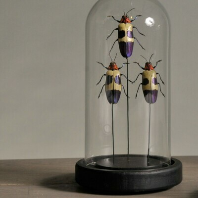 Mini Cloche / Globe Insectes violets ecrus rouges