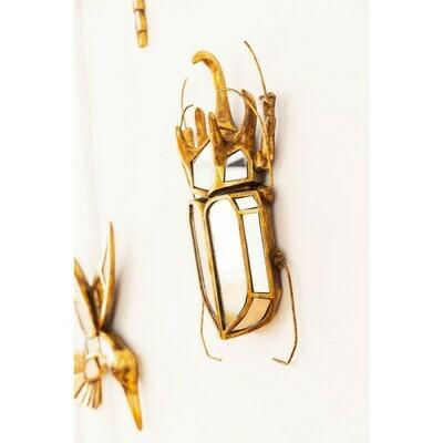 Scarabee Insecte Miroir