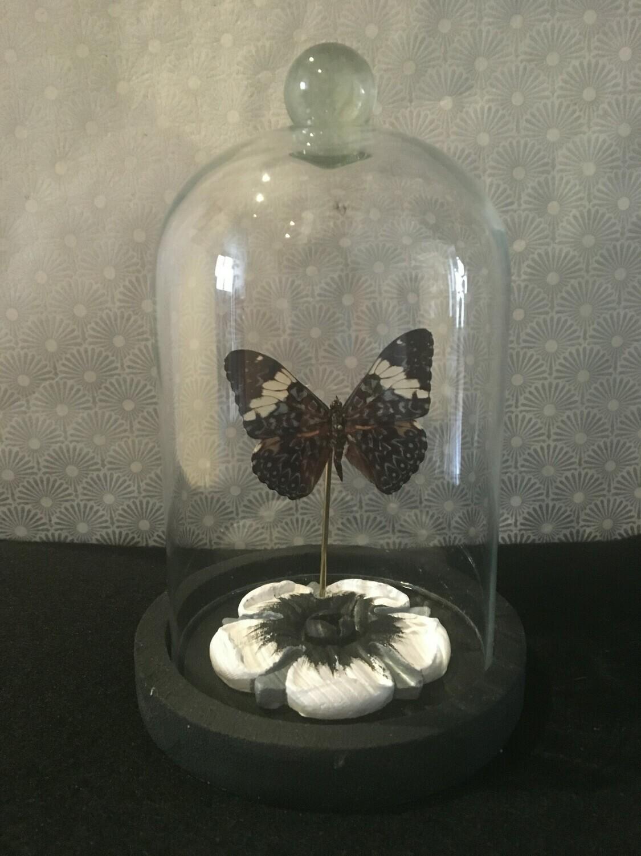 Cloche/ Dome /Globe Papillon Noir sur une Fleur  PIECE UNIQUE ARTISTE FRANCAISE