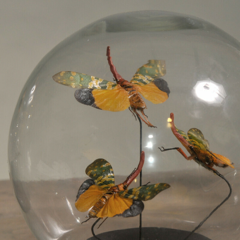 Cloche Globe small Papillons camels et verts