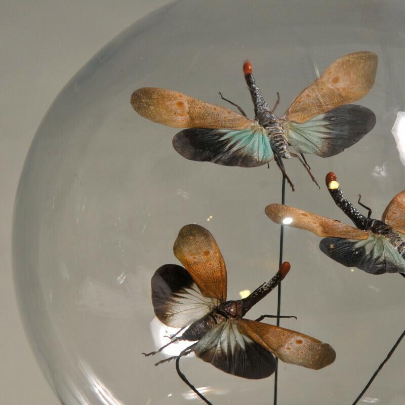 Cloche Globe Large Papillons multicolores