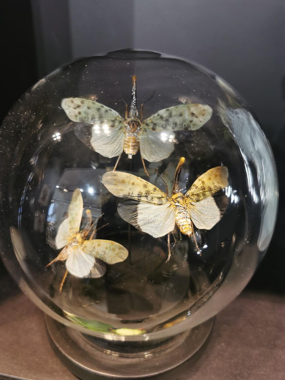 Cloche Globe Medium Papillons Blancs Gris