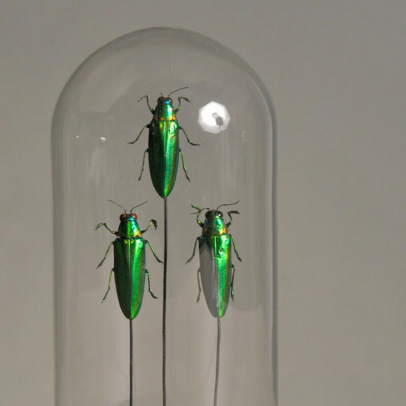 Cloche/ Globe Insectes verts