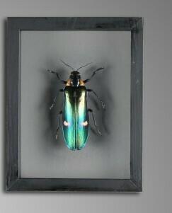 Cadre Insecte Vert