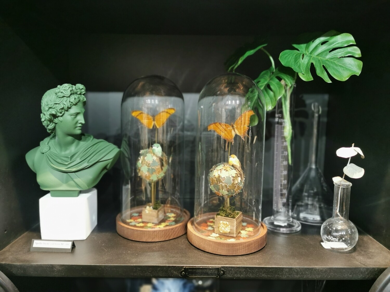 Cloche / Dome /Globe  Papillon PIECE UNIQUE  ARTISTE FRANCAISE