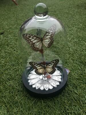 Cloche / Globe deux papillons sur fleur à la feuille d argent . PIECE UNIQUE ARTISTE FRANCAISE