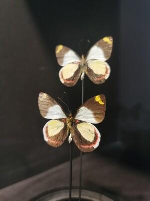 Cloche Papillons blancs
