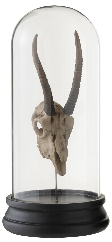 Cloche / Globe Crane d antilope en résine  à l unité RESTOCK IN OCTOBER