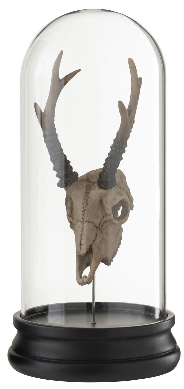 Cloche / Globe  Crane en résine d Antilope RESTOCK IN OCTOBER