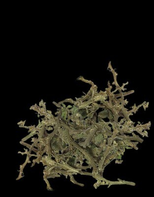 Branches - Pack 10g