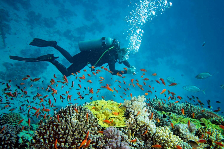 Diving + Snorkeling