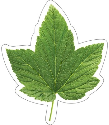 Cut Outs Green Leaf (36 pcs) Woodland Whimsy