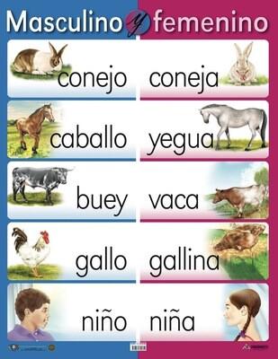 Poster Masculino Y Femenino