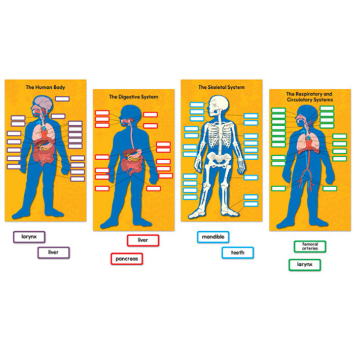 BBS Human Body