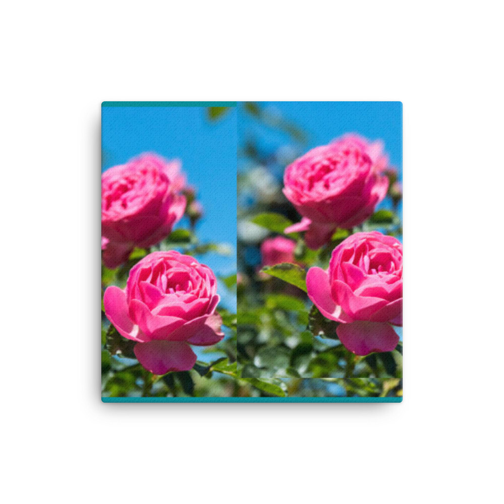 Queen Anne's Cambridge Rose Canvas