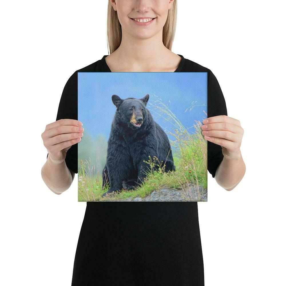 Black Bear Canvas