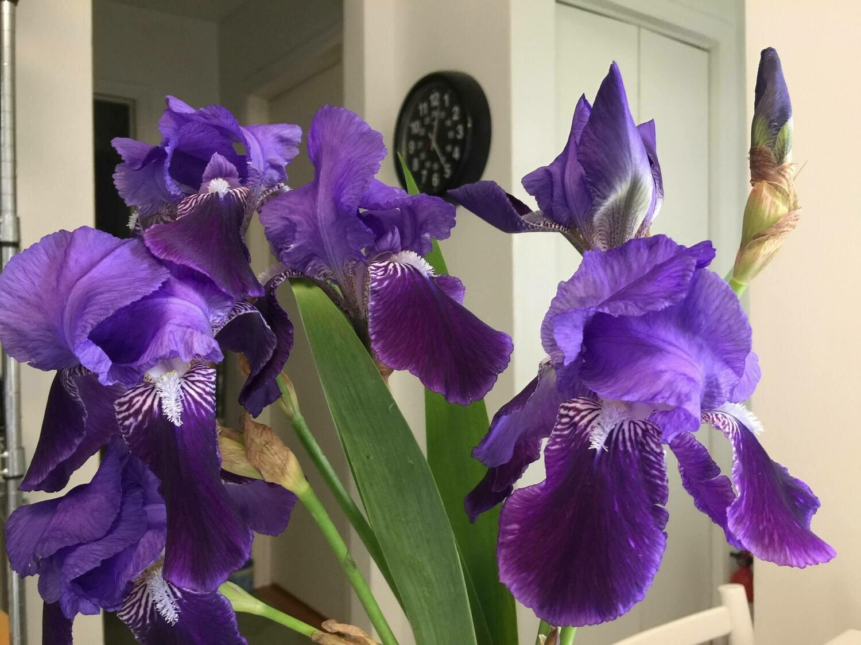Iris Salon Pillow