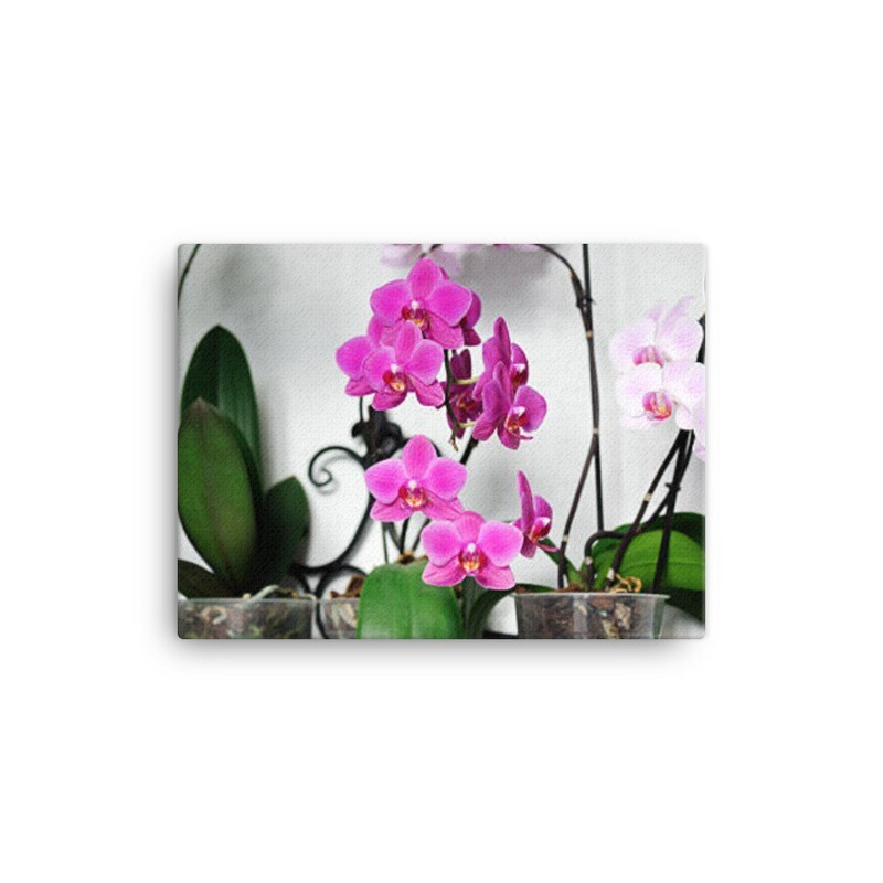 Romantic Orchid Canvas