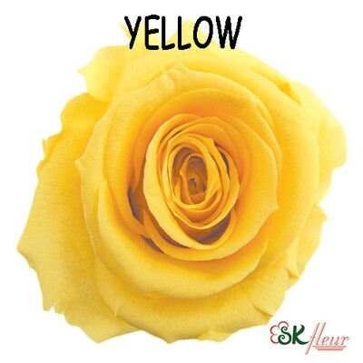 Standard Rose / Yellow