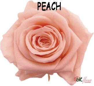 Standard Rose / Peach
