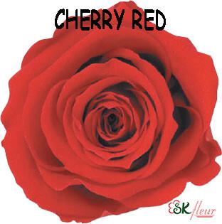 Standard Rose / Cherry Red