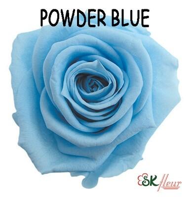 Standard Rose / Powder Blue