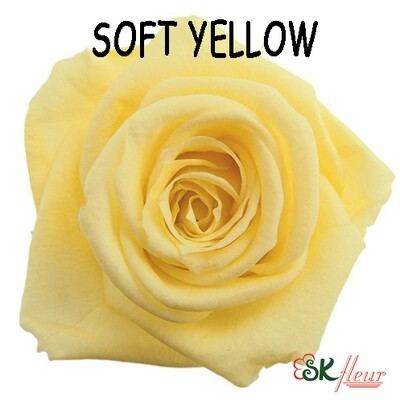 Standard Rose / Soft Yellow