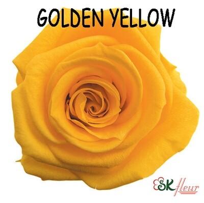 Standard Rose / Golden Yellow