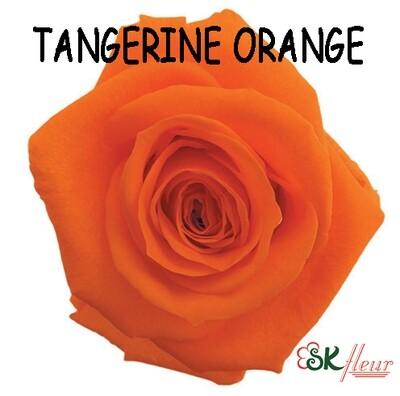 Standard Rose / Tangerine Orange