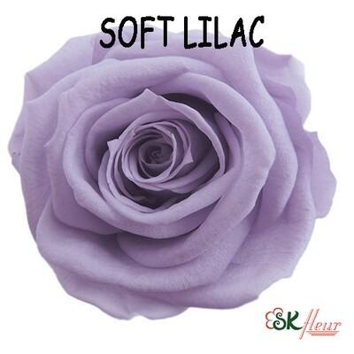 Standard Rose / Soft Lilac