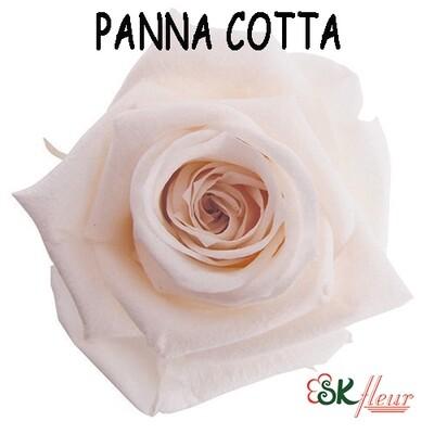 Standard Rose / Panna Cotta