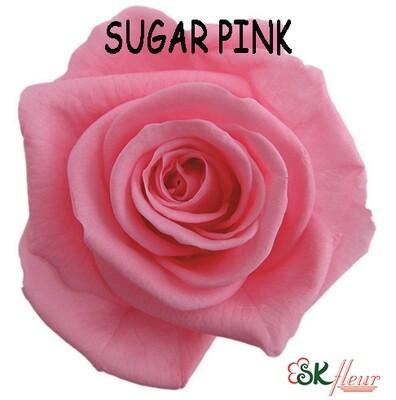 Standard Rose / Sugar Pink