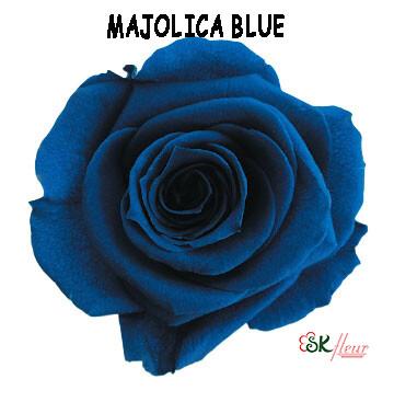 Standard Rose / Majolica Blue