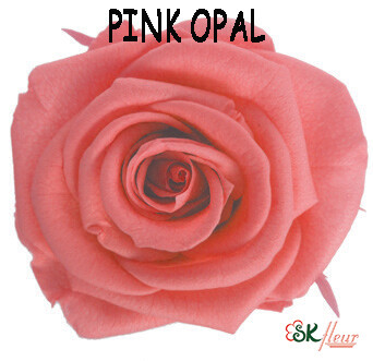 Standard Rose / Pink Opal