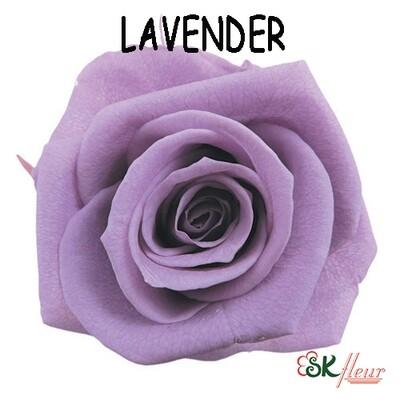 Standard Rose / Lavender