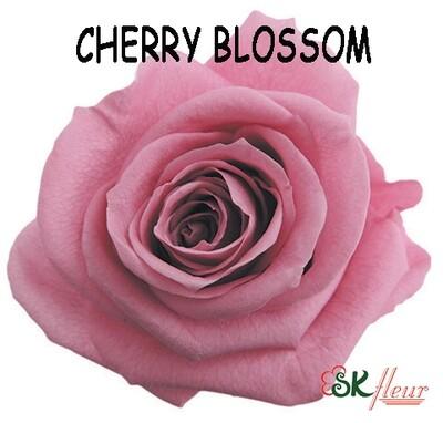 Standard Rose / Cherry Blossom