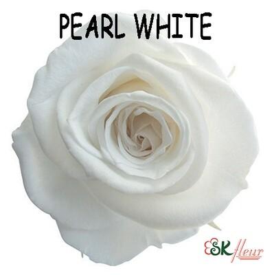 Mediana Rose / Pearl White