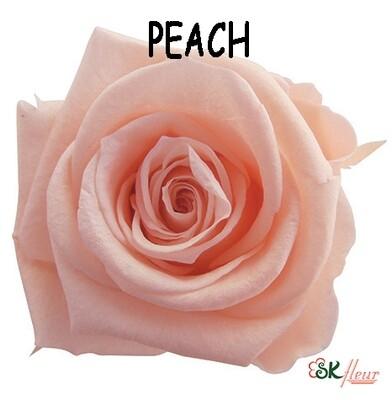 Mediana Rose / Peach