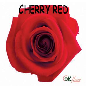 Mediana Rose / Cherry Red