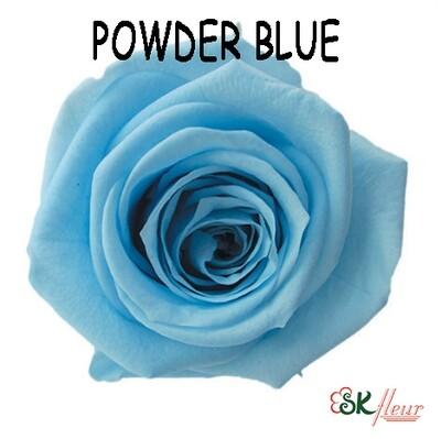 Mediana Rose / Powder Blue