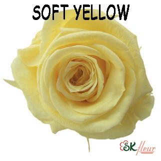 Mediana Rose / Soft Yellow