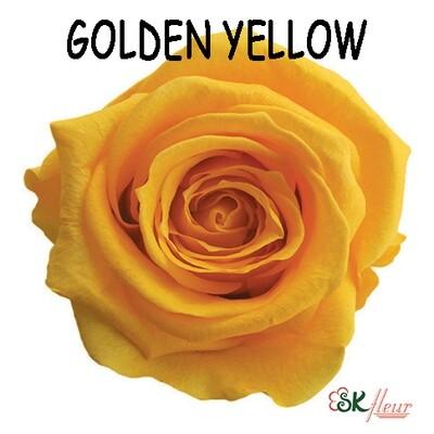 Mediana Rose / Golden Yellow