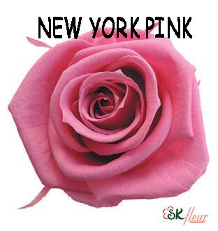 Mediana Rose / New York Pink