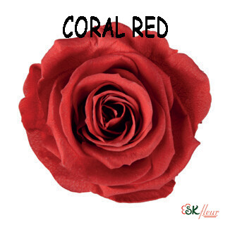 Mediana Rose / Coral Red