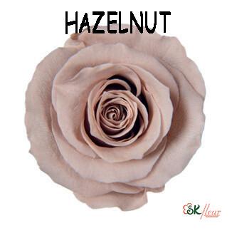 Mediana Rose / Hazelnut